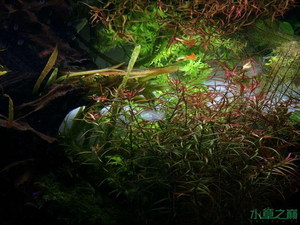 开缸1个半月后经历各种问题 西安观赏鱼信息 西安博特第3张