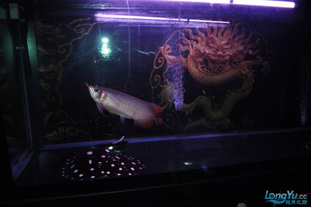 疯子丁丁 西安观赏鱼信息 西安博特第2张