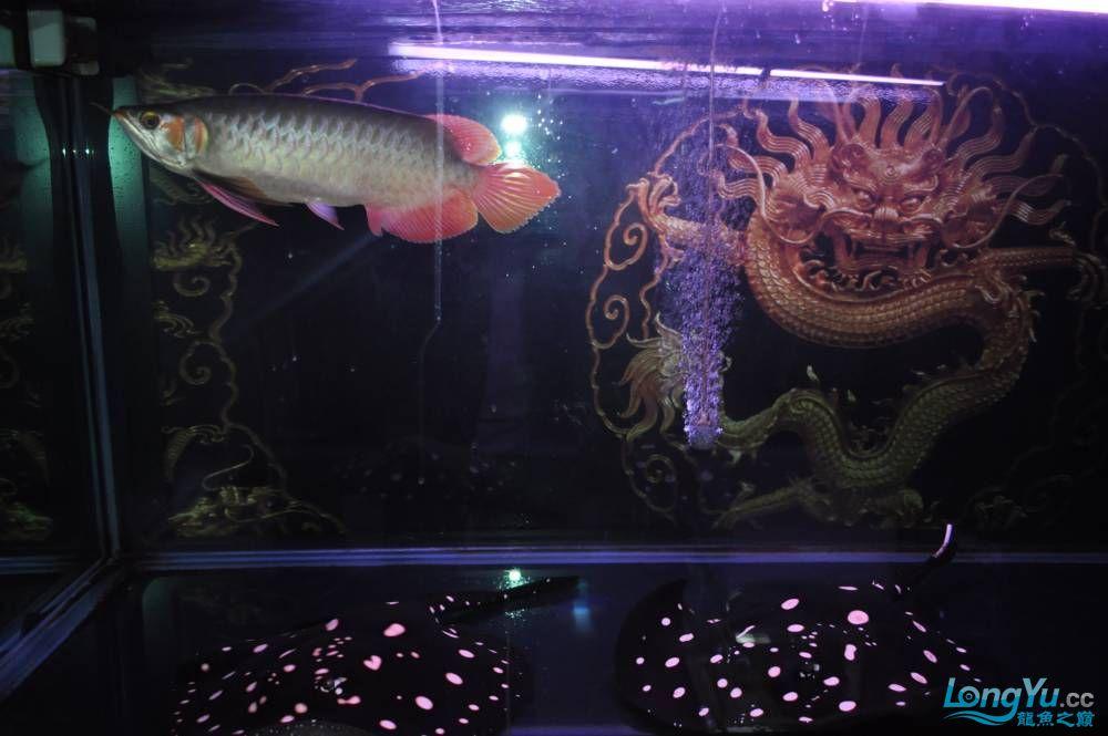 疯子丁丁 西安观赏鱼信息 西安博特第3张