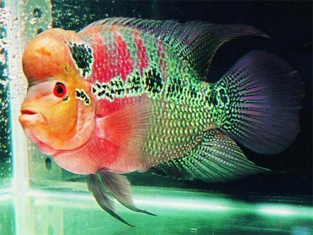 从小到现在四五个年头了 西安龙鱼论坛 西安博特第2张