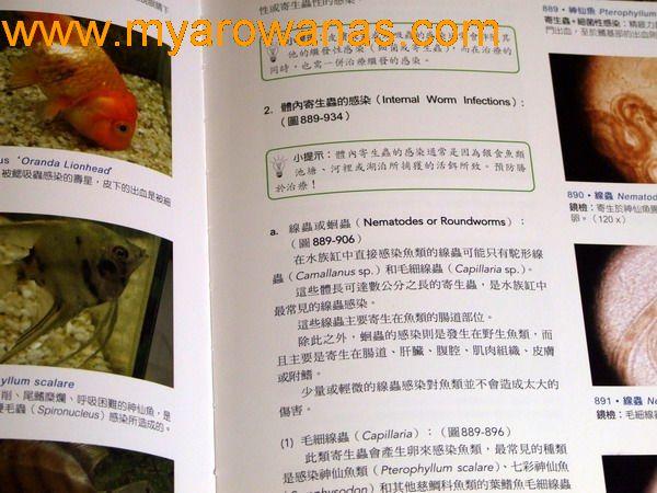 鸿福生态鱼缸 西安观赏鱼信息