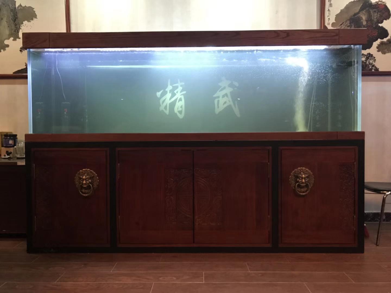 放水养鱼龙鱼 西安龙鱼论坛 西安博特第1张