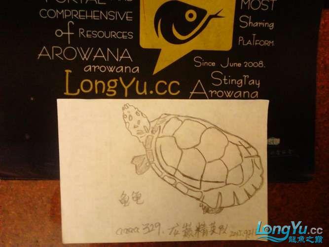 【龙巅精英】铝笔绘画、(龟龟) 西安观赏鱼信息 西安博特第2张