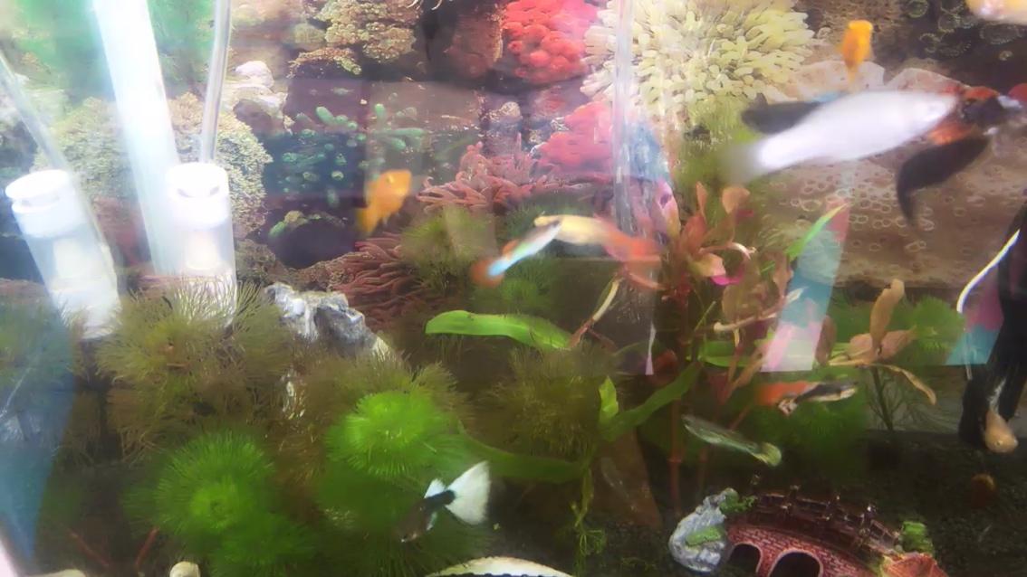 我的鱼怎么一天死一条 西安龙鱼论坛 西安博特第1张