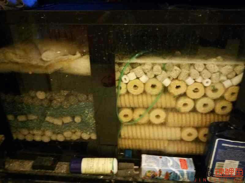 求滤材摆放顺序 西安观赏鱼信息 西安博特第1张