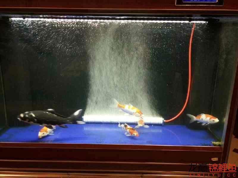 求滤材摆放顺序 西安观赏鱼信息 西安博特第3张