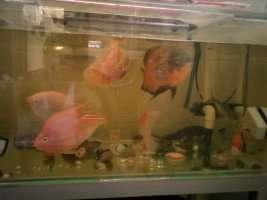 【西安鱼缸清洗】分享 西安观赏鱼信息 西安博特第2张