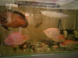 【西安鱼缸清洗】分享 西安观赏鱼信息 西安博特第3张
