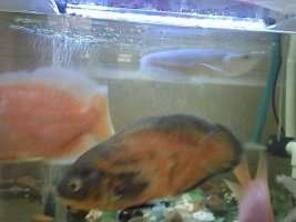 【西安鱼缸清洗】分享 西安观赏鱼信息 西安博特第4张
