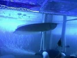 【西安鱼缸清洗】分享 西安观赏鱼信息 西安博特第7张
