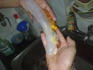 【西安花鸟鱼市】龙鱼蛋你们见过没?速来围观啦解剖给大家欣赏(更新) 西安观赏鱼信息 西安博特第14张