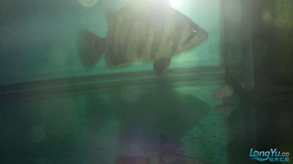 印尼吃猪肉啊怎么回事 西安观赏鱼信息 西安博特第1张