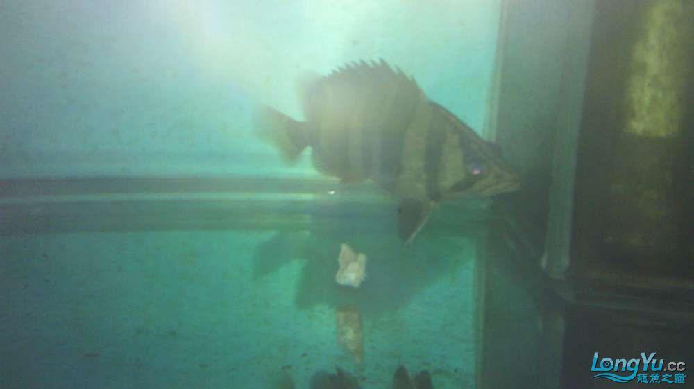 印尼吃猪肉啊怎么回事 西安观赏鱼信息 西安博特第4张