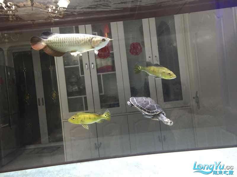 请大家指点谢谢 西安观赏鱼信息 西安博特第2张