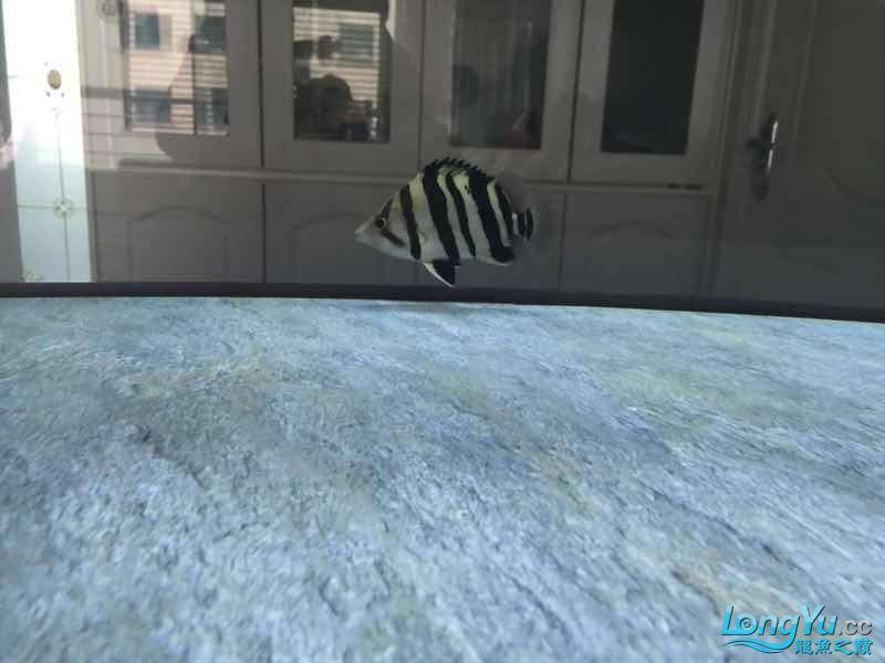 请大家指点谢谢 西安观赏鱼信息 西安博特第5张