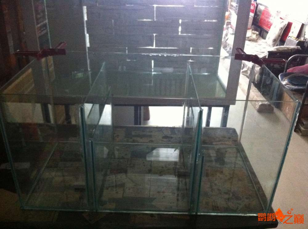 帮朋友DIY 2个小缸 刚完工12米x05米x06米高 西安龙鱼论坛 西安博特第3张