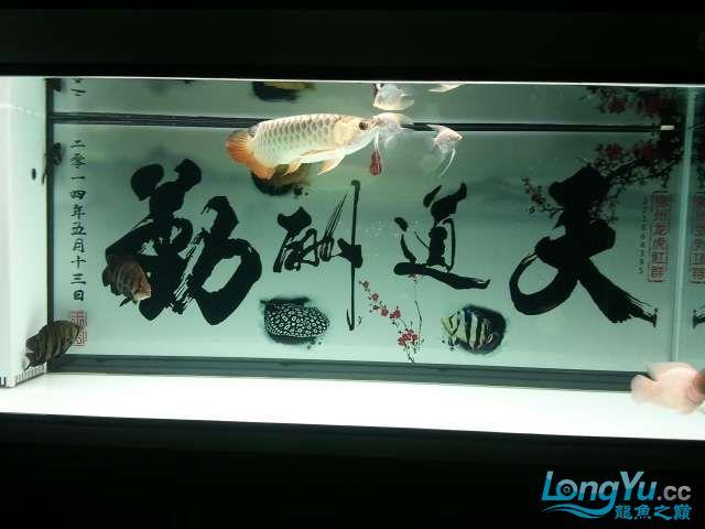 闲来没事 发几张小龙照片 还附加视频呦 西安观赏鱼信息 西安博特第4张