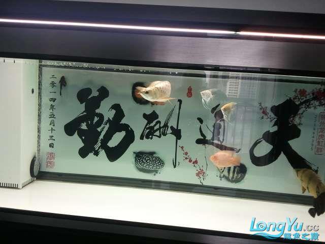 闲来没事 发几张小龙照片 还附加视频呦 西安观赏鱼信息 西安博特第9张