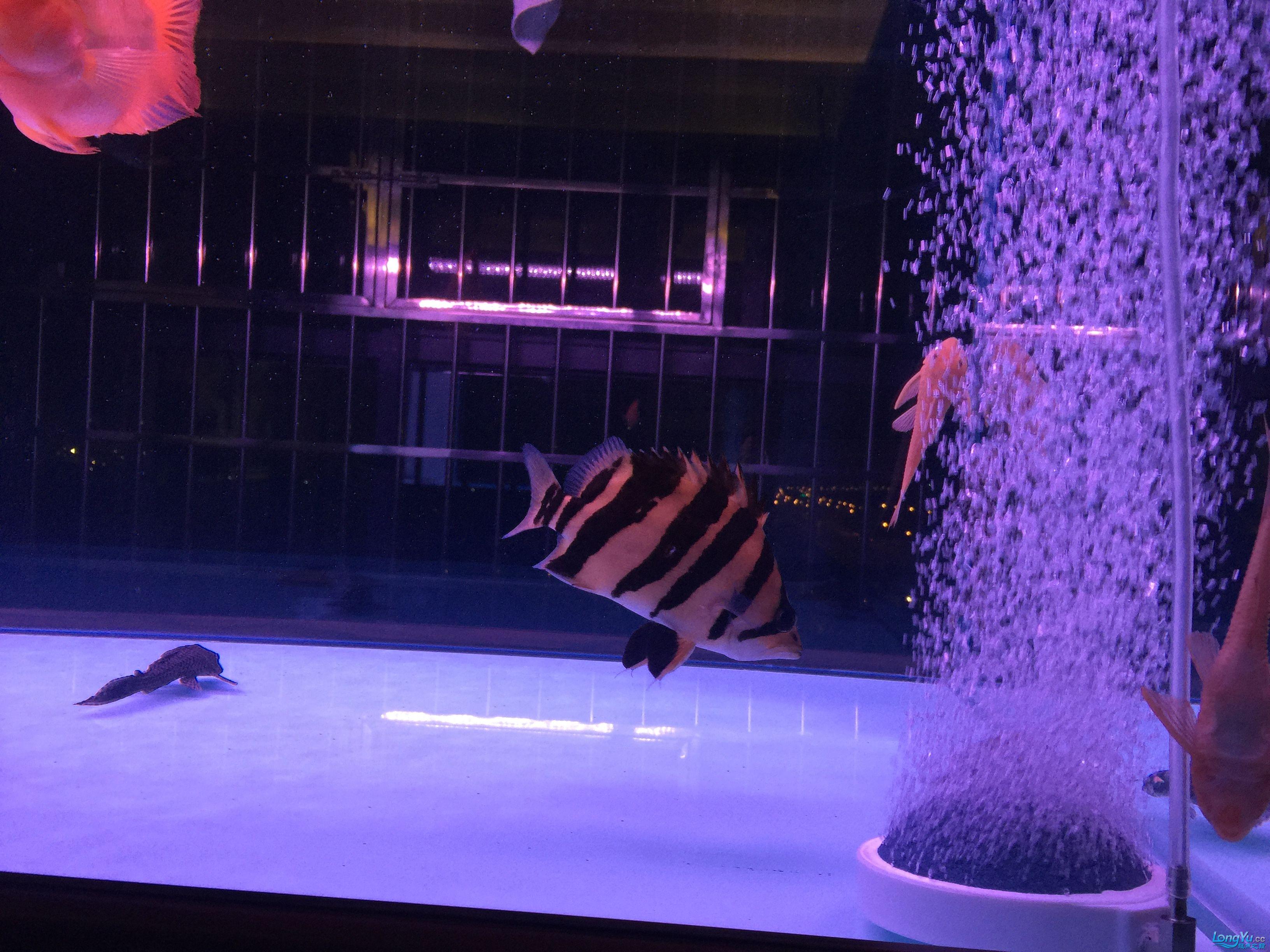 【西安鱼缸厂家】鱼友们除鱼腥味有什么好办法?