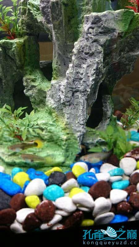 【西安花鸟鱼市】我的鱼缸 西安观赏鱼信息 西安博特第2张