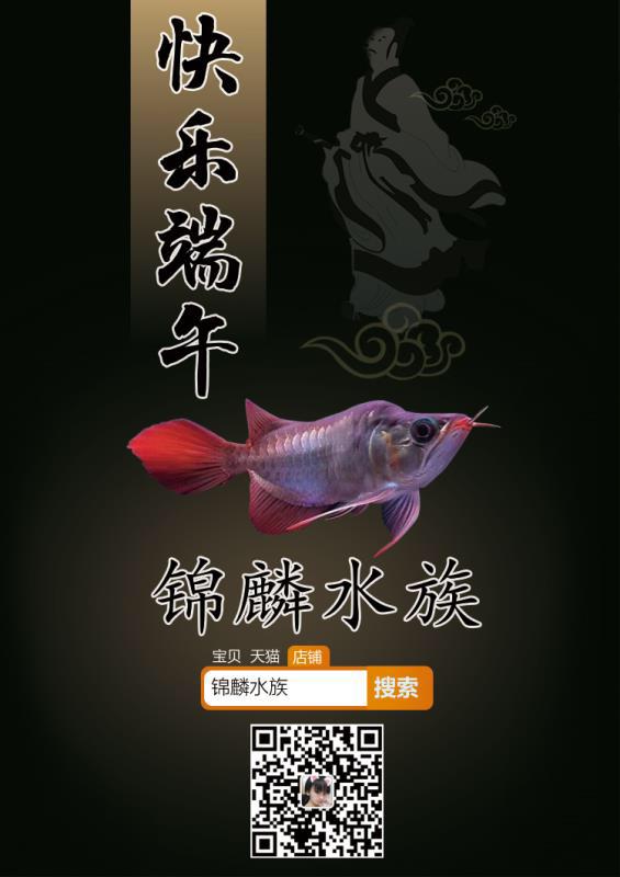 迎接父亲节和端午节 西安龙鱼论坛