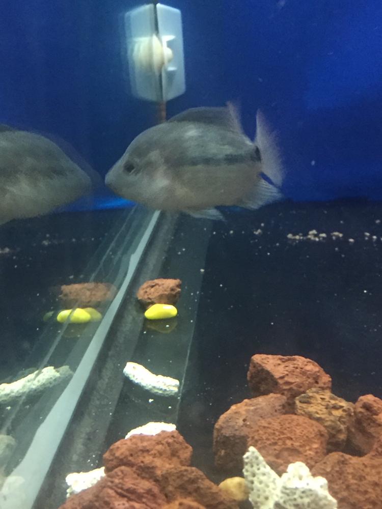 养罗日记大器晚成 西安观赏鱼信息 西安博特第1张