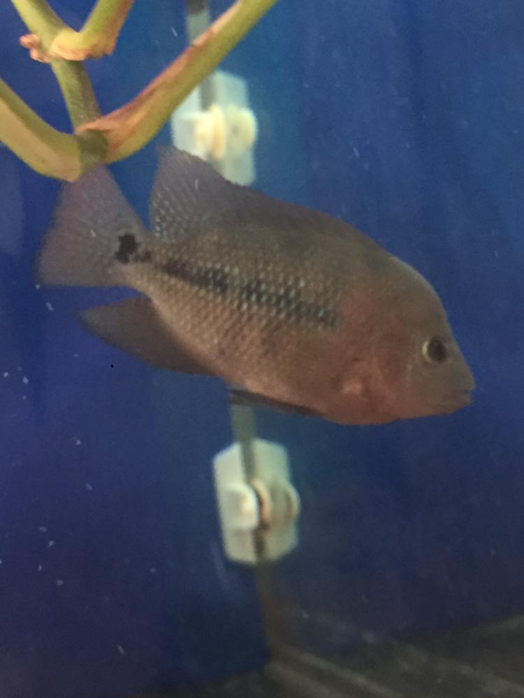 养罗日记大器晚成 西安观赏鱼信息 西安博特第4张