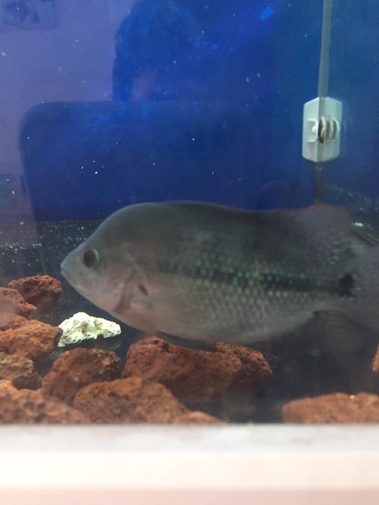 养罗日记大器晚成 西安观赏鱼信息 西安博特第3张