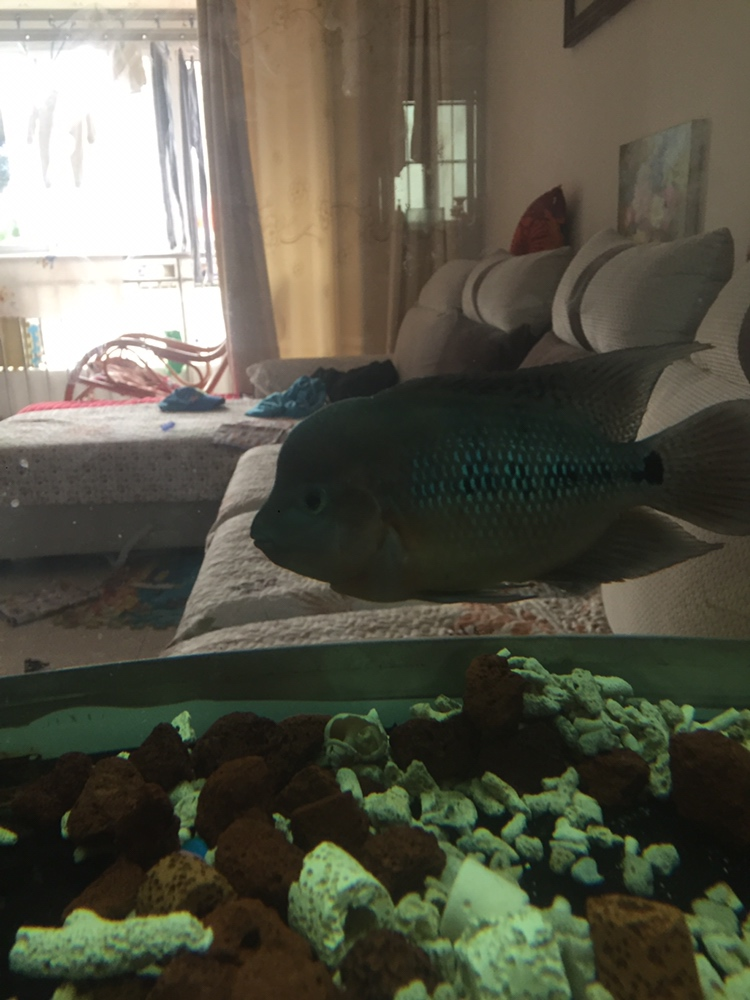 养罗日记大器晚成 西安观赏鱼信息 西安博特第8张