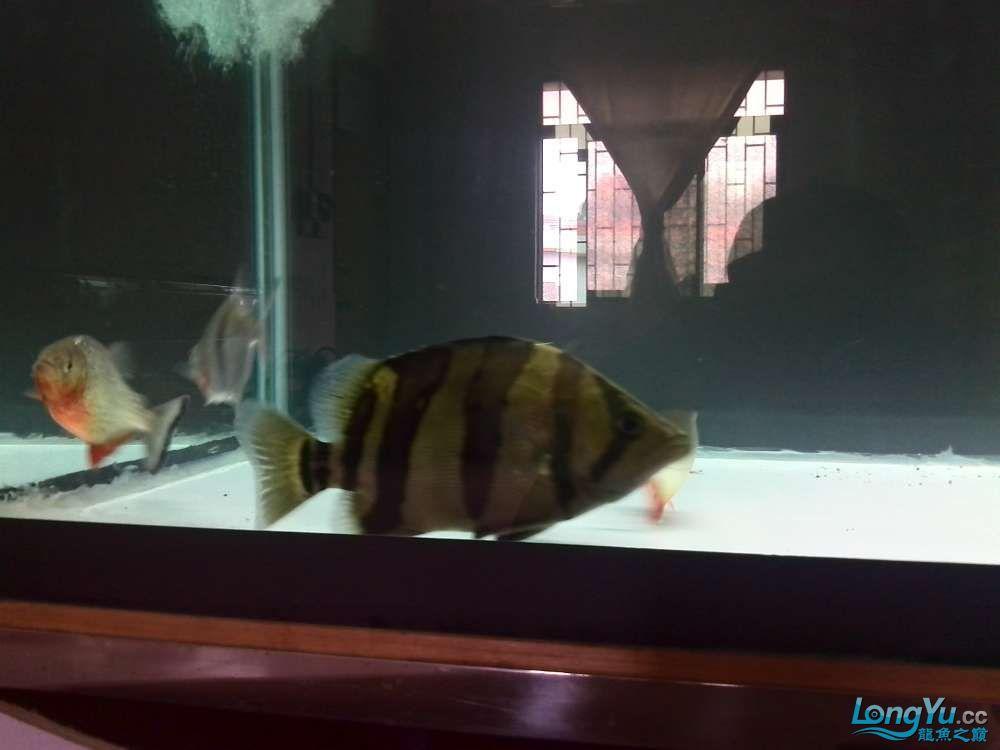 请问新缸新水多久才可以养魟鱼 西安观赏鱼信息 西安博特第1张