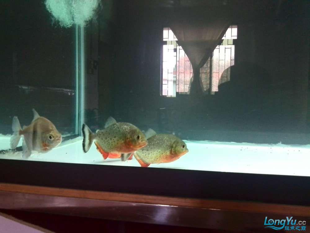请问新缸新水多久才可以养魟鱼 西安观赏鱼信息 西安博特第2张