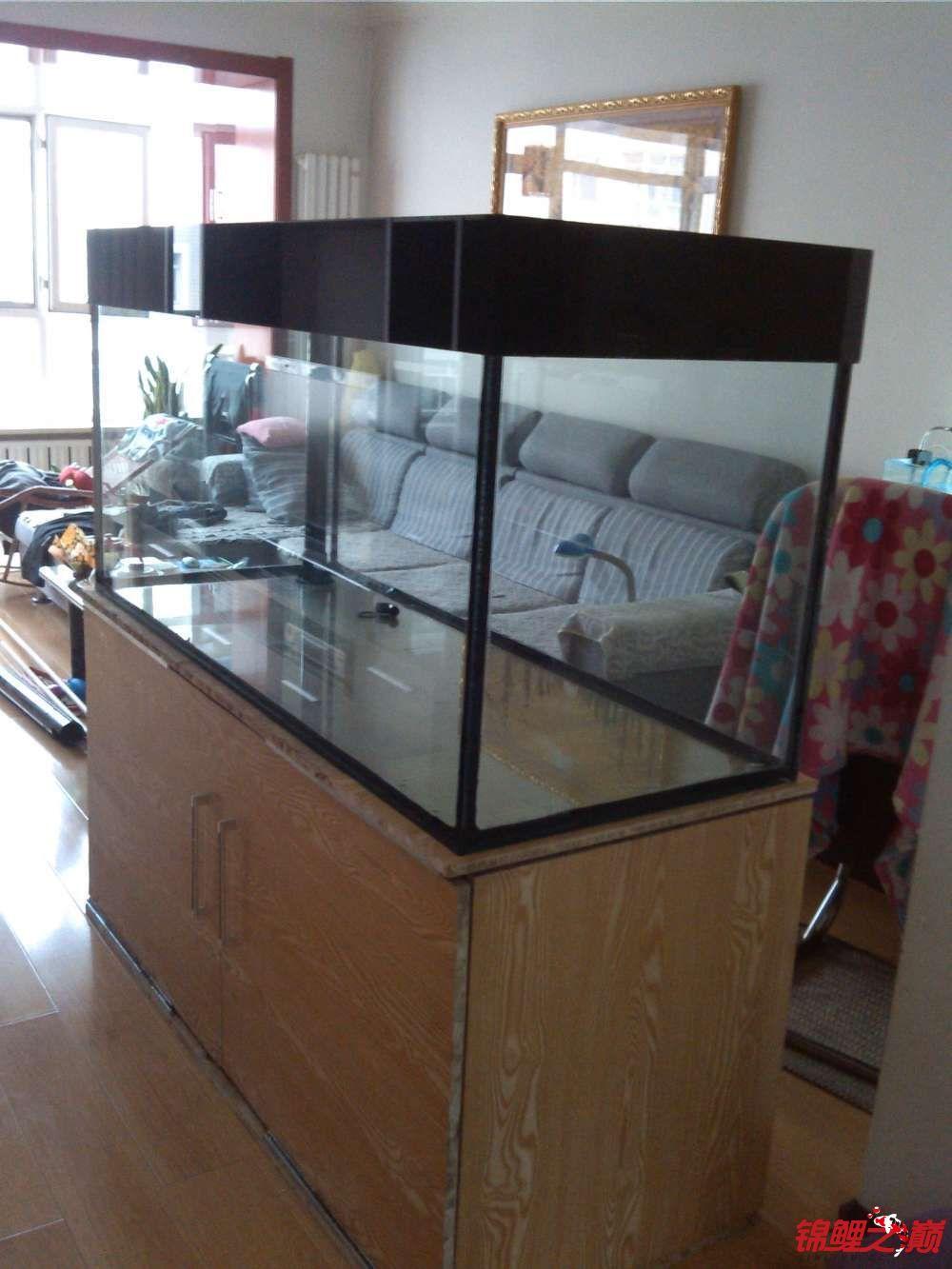 我这个缸子养锦鲤可以吗? 西安观赏鱼信息 西安博特第1张