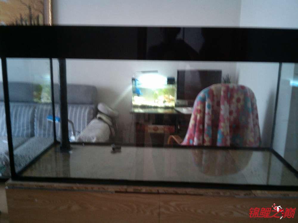 我这个缸子养锦鲤可以吗? 西安观赏鱼信息 西安博特第2张
