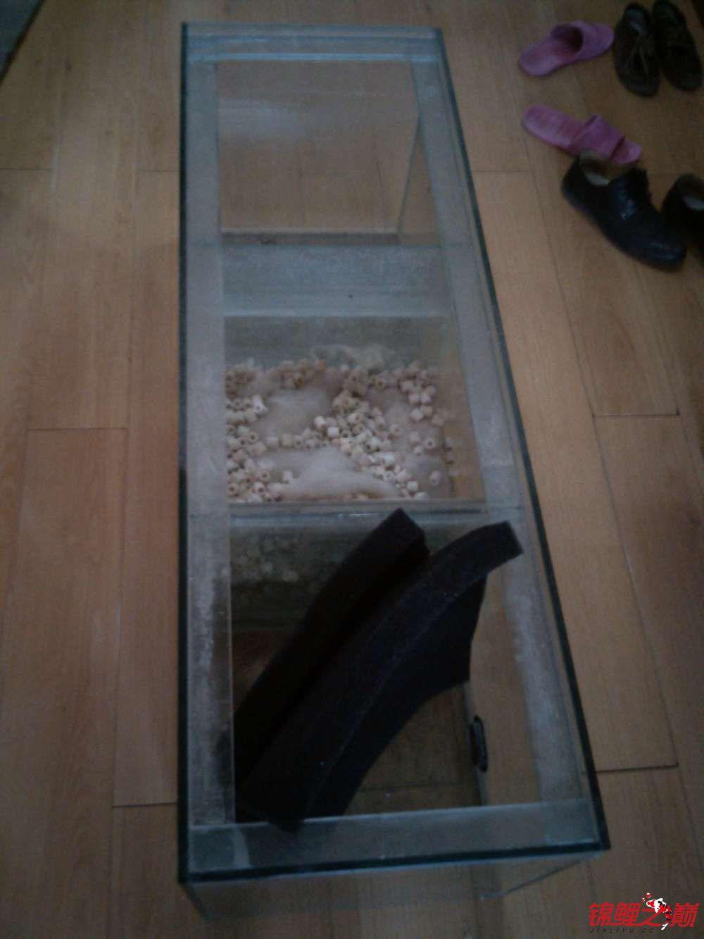 我这个缸子养锦鲤可以吗? 西安观赏鱼信息 西安博特第5张