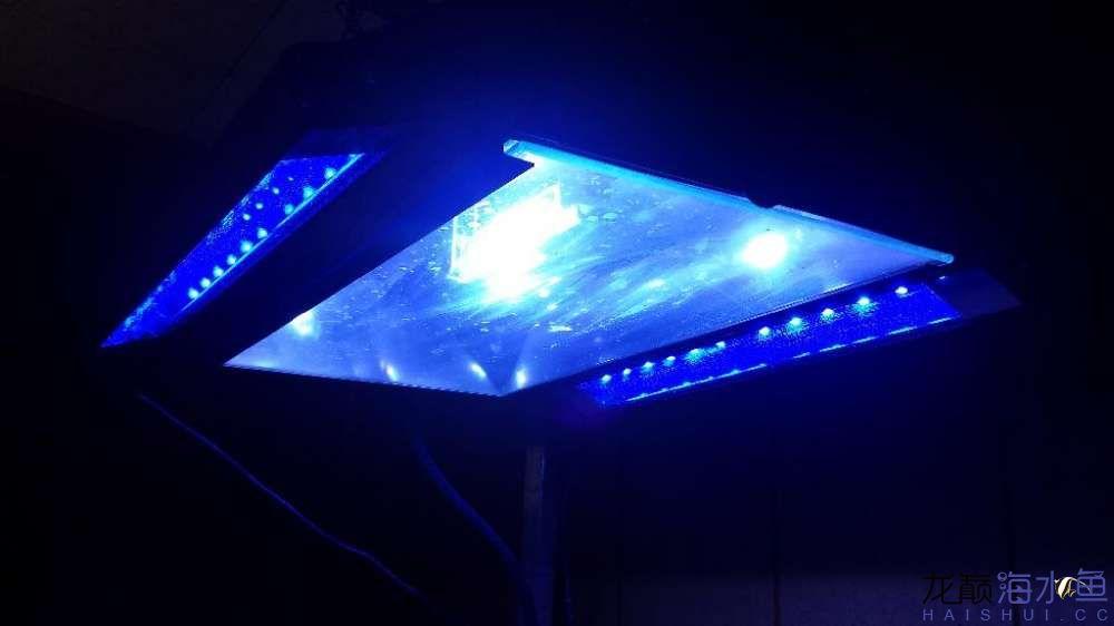 这个灯怎么样 西安观赏鱼信息 西安博特第1张