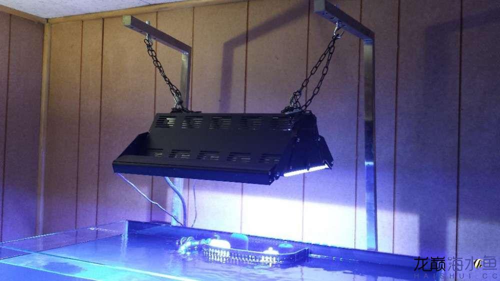 这个灯怎么样 西安观赏鱼信息 西安博特第2张