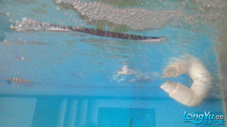 鱼趣养水机养水说一说我自己比较特别的换水方式 西安龙鱼论坛 西安博特第4张