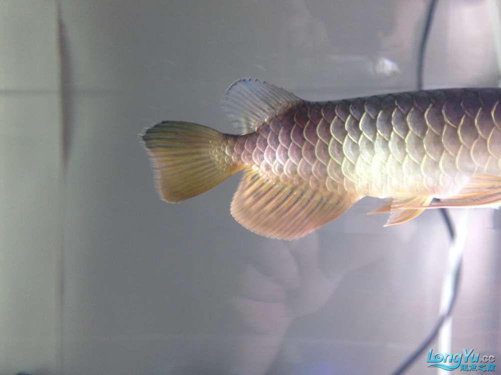 求各路神通鱼友帮我看看我买这个是否是过背 西安观赏鱼信息 西安博特第6张