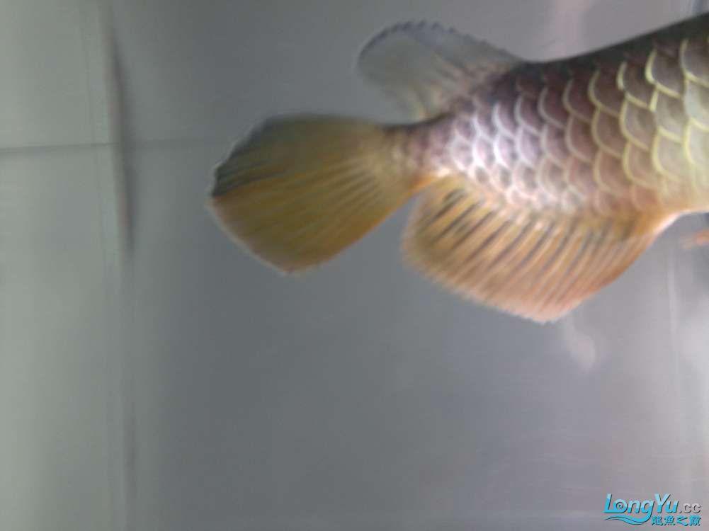 求各路神通鱼友帮我看看我买这个是否是过背 西安观赏鱼信息 西安博特第9张