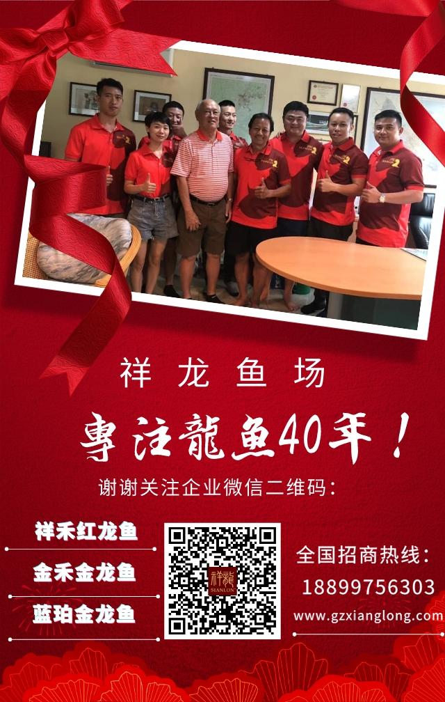 广州祥龙鱼场官方企业微信 西安观赏鱼信息 西安博特第1张