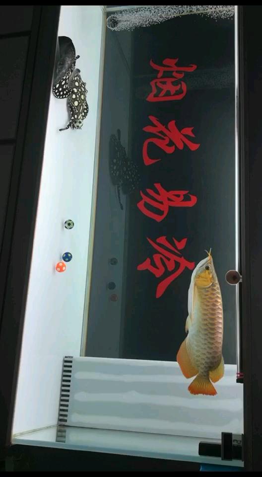 算空气缸么龙鱼 西安龙鱼论坛 西安博特第1张