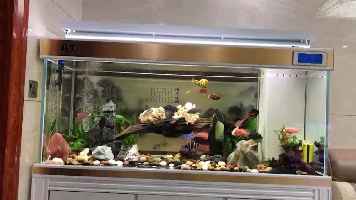 早上好打卡时间 西安观赏鱼信息