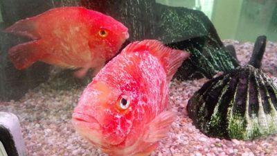 出售2手森森水族箱带鱼{观看详解} 西安龙鱼论坛