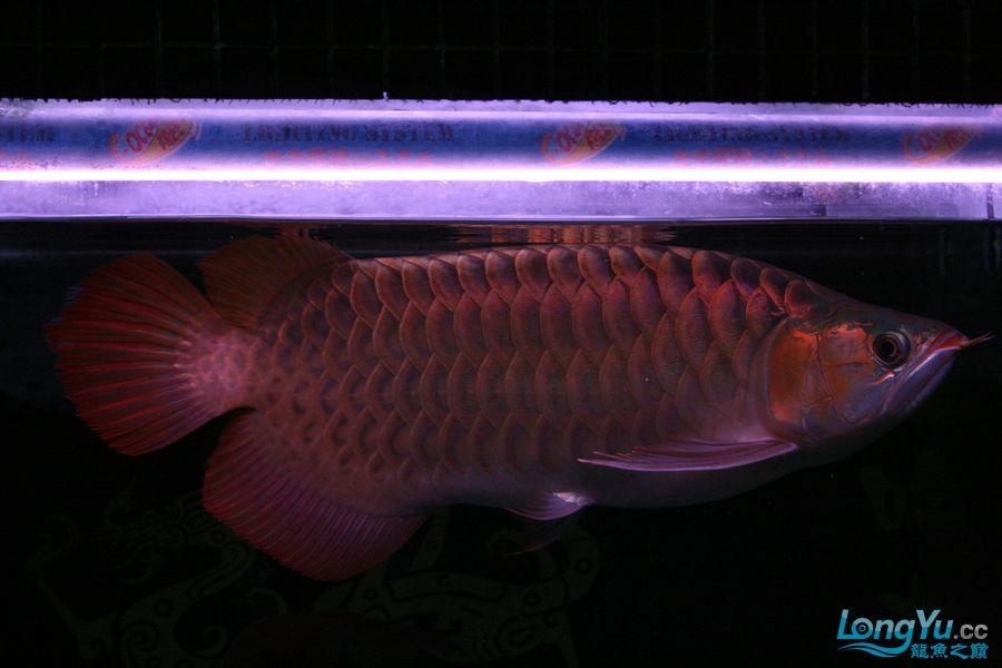 分享泗水 西安观赏鱼信息 西安博特第6张