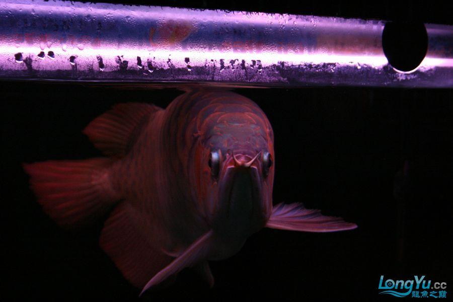 分享泗水 西安观赏鱼信息 西安博特第7张