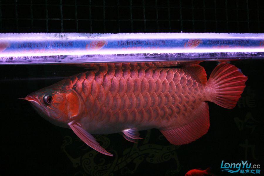 分享泗水 西安观赏鱼信息 西安博特第8张