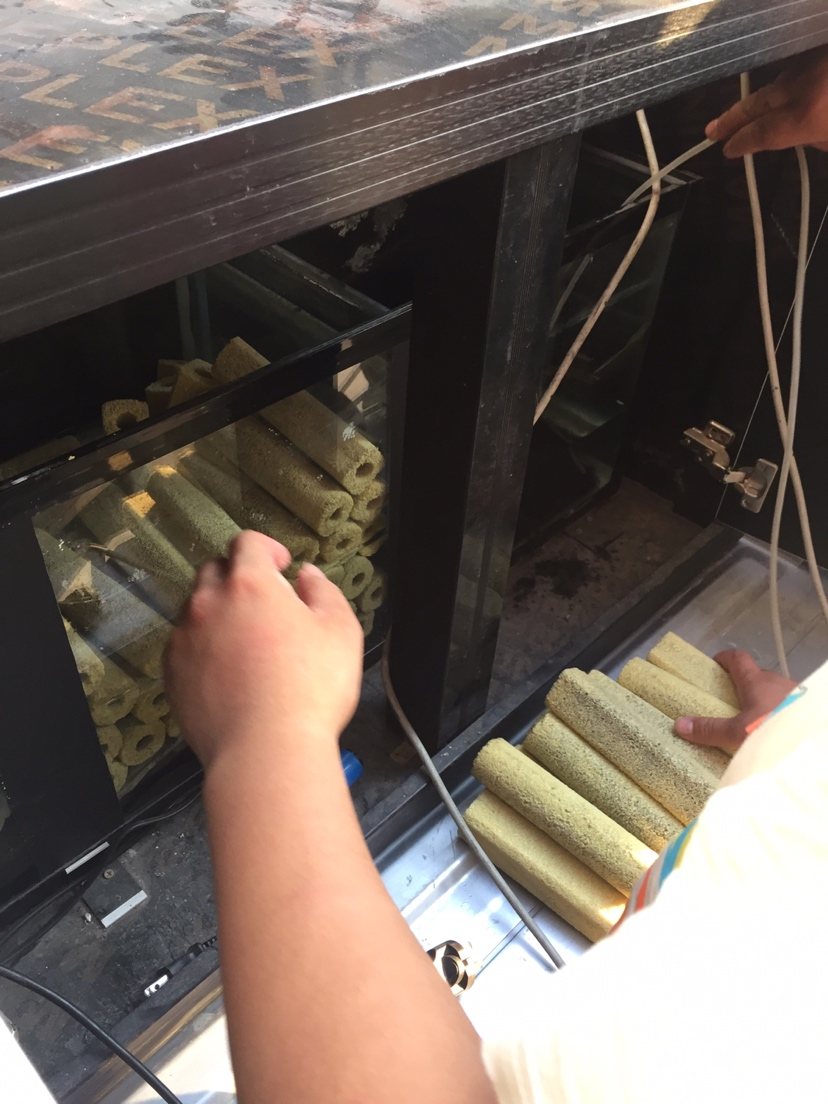 18m大缸三湖慈鲷 西安龙鱼论坛 西安博特第2张