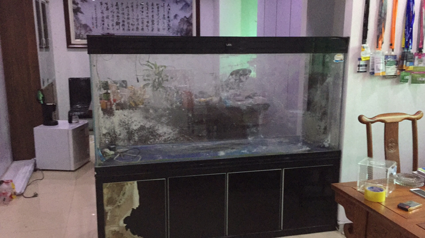 18m大缸三湖慈鲷 西安龙鱼论坛 西安博特第6张