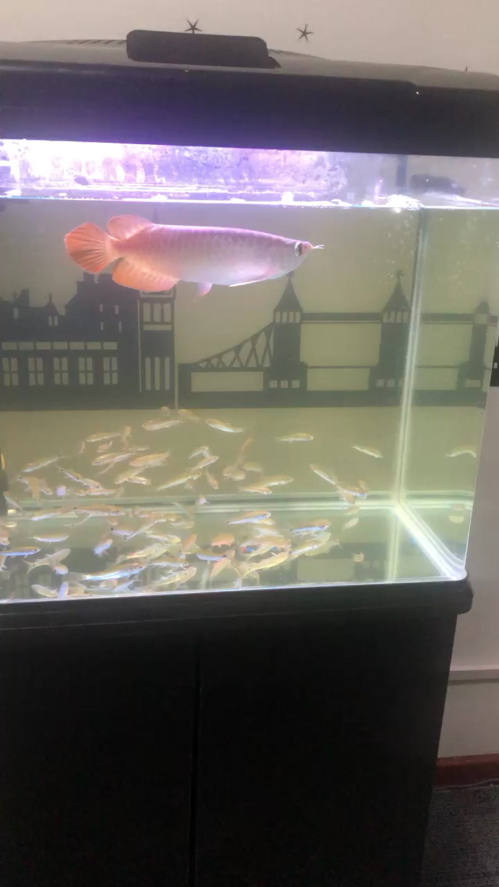 又吃完一缸小鱼 西安观赏鱼信息