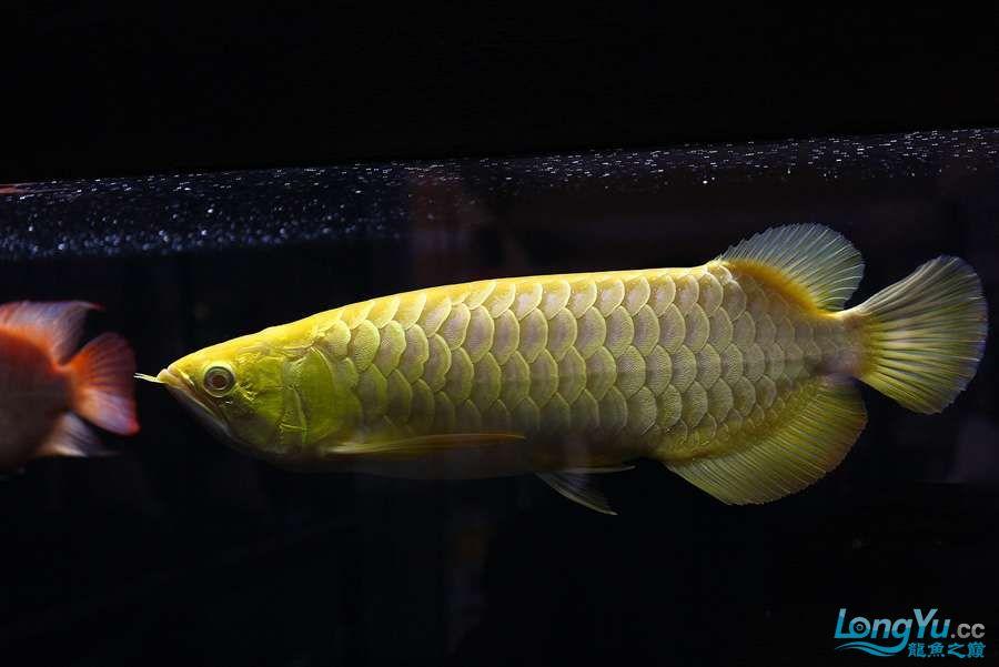养不着光看看就美 西安观赏鱼信息 西安博特第2张